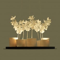 Cymbidium Chandelier