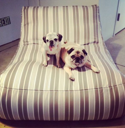 Pug Lounge Chair, SUITE NY's Zoe Outdoor Lounge