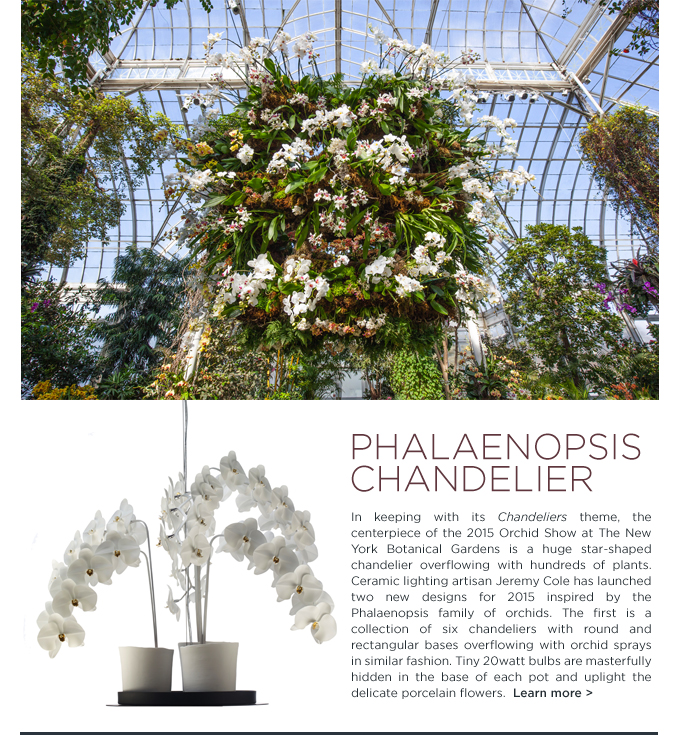 Phalaenopsis Chandelier, Jeremy Cole, New York Botanical Garden, Orchid show
